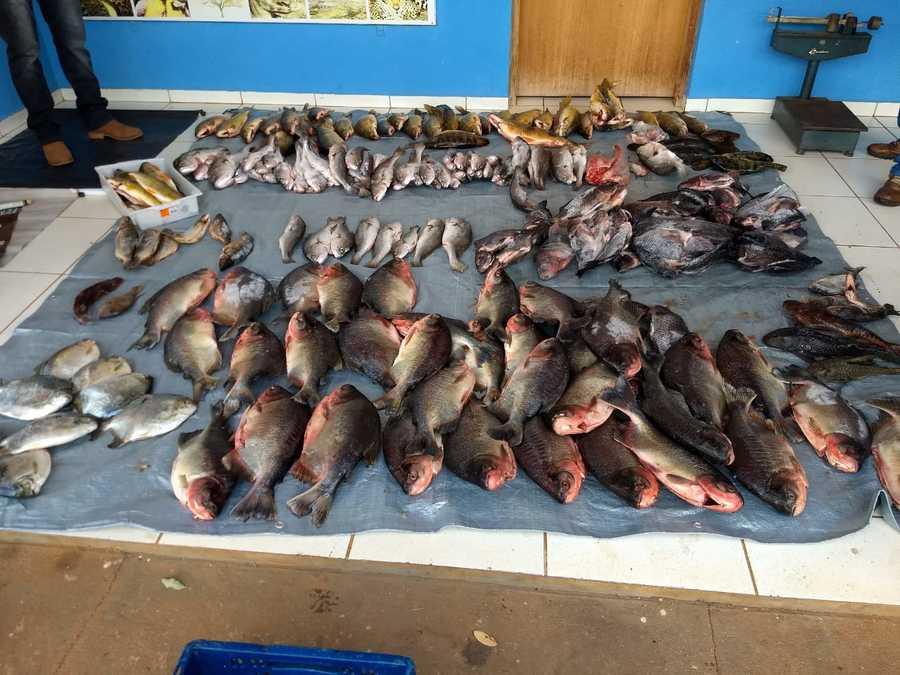 Center pescado tl pma imasul 31 de janeiro de 2020 1