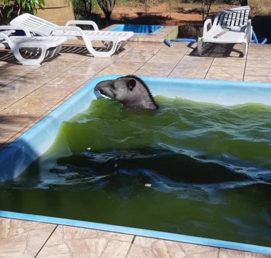 Center anta captura em piscina 20 de junho de 2020