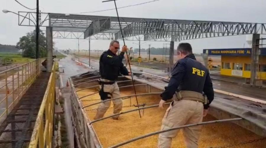 Center prf apreende 11 toneladas de maconha sob carga de milho em ponta por ms 800x445