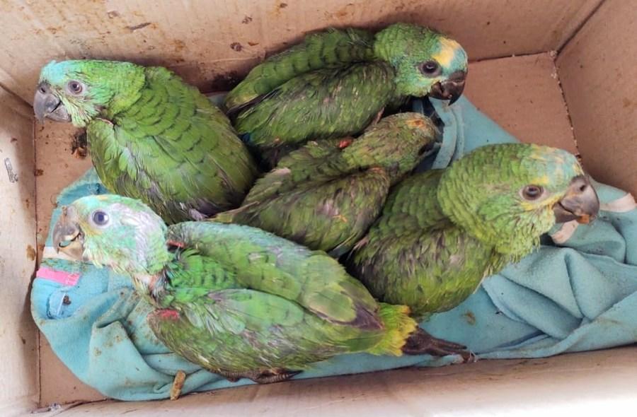 Center filhotes de papagaios jardim 12 de novembro de 2020