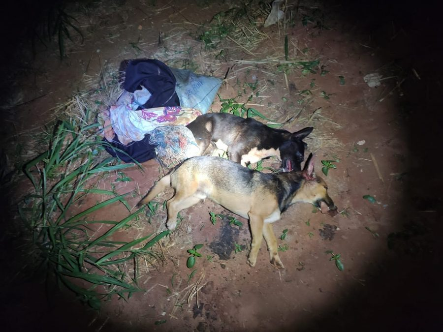 Center cachorros mortos batagaussu 15 de julho de 2021 1536x1152