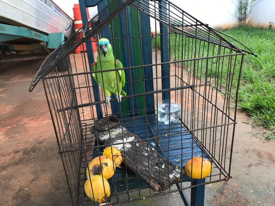 Center papagaio