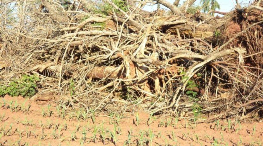 Center rvores derrubadas bataypor 22 de janeiro de 2019 672x372