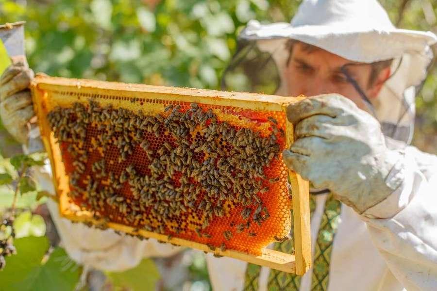 Center apicultura site